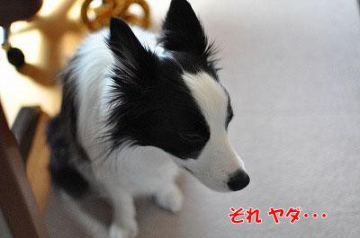 201103-sen3.jpg