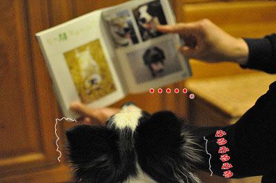 201103-wan2803.jpg
