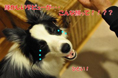 201103-wan2804.jpg