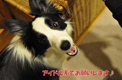 201103-wan2806.jpg