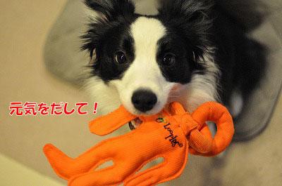 201103-wan3001.jpg