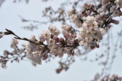 201104-saku1003.jpg