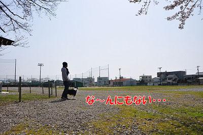 201104-saku1004.jpg