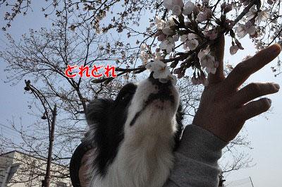 201104-saku1005.jpg