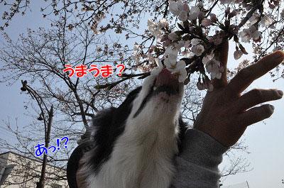 201104-saku1006.jpg