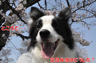 201104-saku1009.jpg