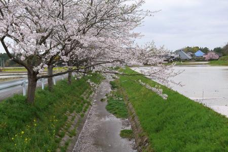 0-satoyama4xx.jpg