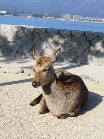 宮島2 鹿