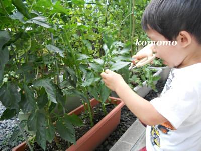 DSCN3393_convert_20110824220506.jpg