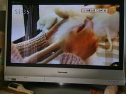 中山みどり先生201412030007