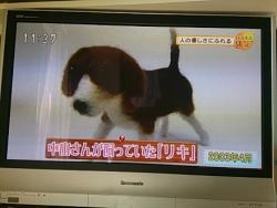 中山みどり先生201412030004
