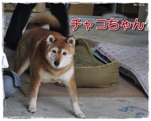 9_20110616230617.jpg