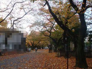 音を立てて葉が落ちてます