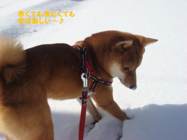 大晦日の雪4