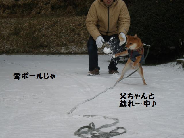 雪~~~~~