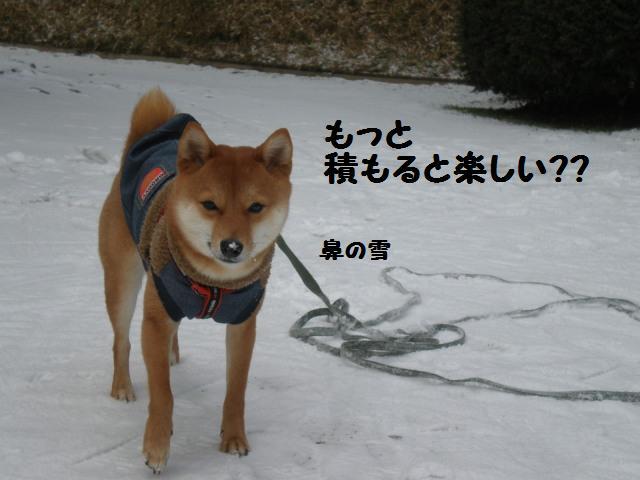雪~~~~