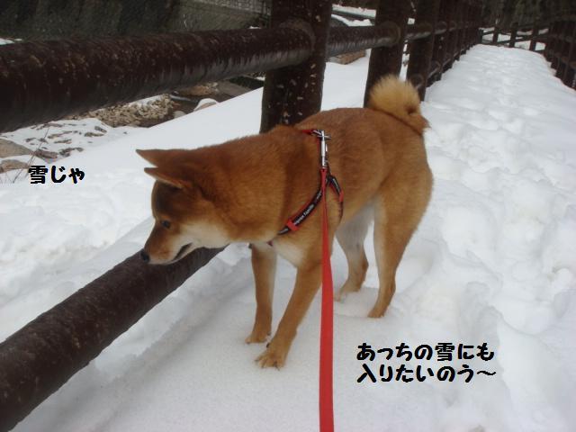 雪あそび4