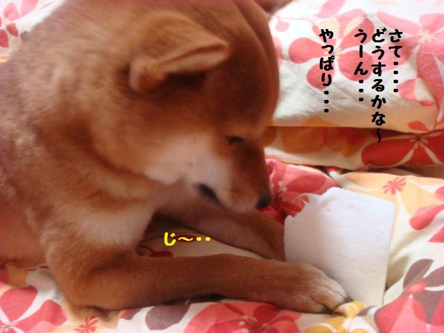 ぱっくん2