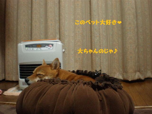 きんちゃく犬2