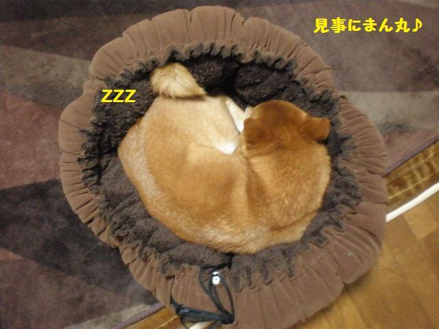 きんちゃく犬3
