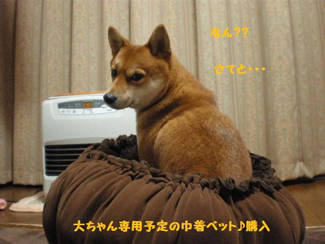 きんちゃく犬