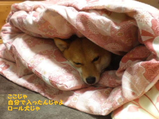 ロール犬2