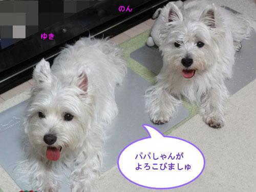 DSC02705.jpg