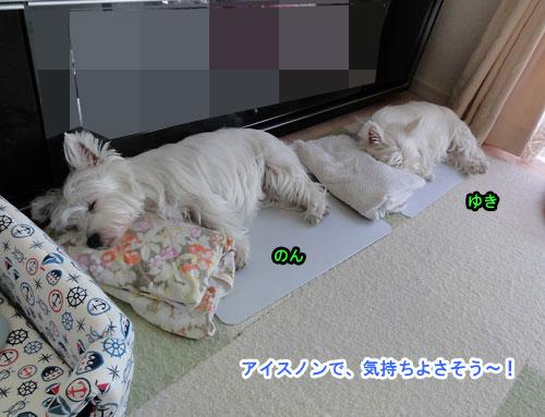 DSC02909_20110628160946.jpg