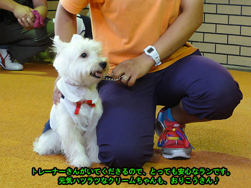 DSC03454.jpg