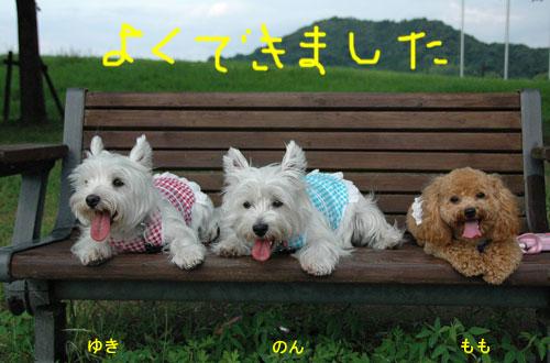 DSC_0026_20110703114443.jpg