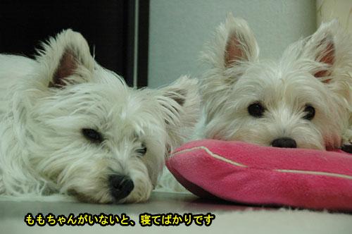 DSC_0087_20110705214032.jpg