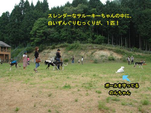 DSC_0239_20110607190113.jpg