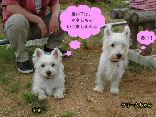DSC_0247_20110607190812.jpg