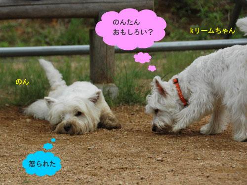 DSC_0306_20110607190812.jpg