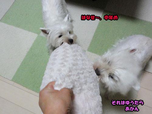 K5_20110907173305.jpg