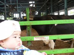 息子くんと牛くん