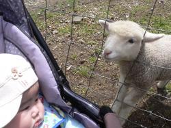 息子くんと羊さん