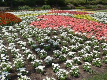 かわいいお花たち