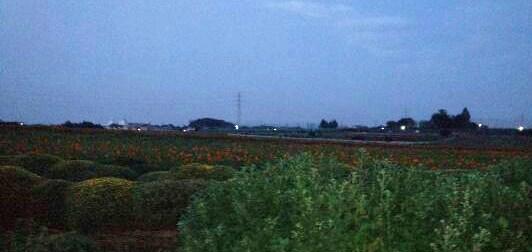 img20141011_佐久間牧場