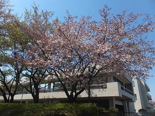 tachikawa-street21.jpg