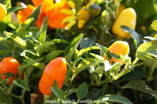 cantik1_20101025072437.jpg