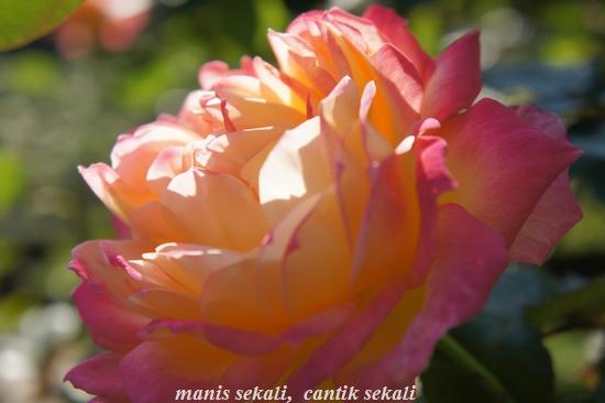 cantik1_20101111232433.jpg