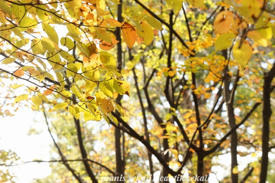 cantik2_20101120210212.jpg