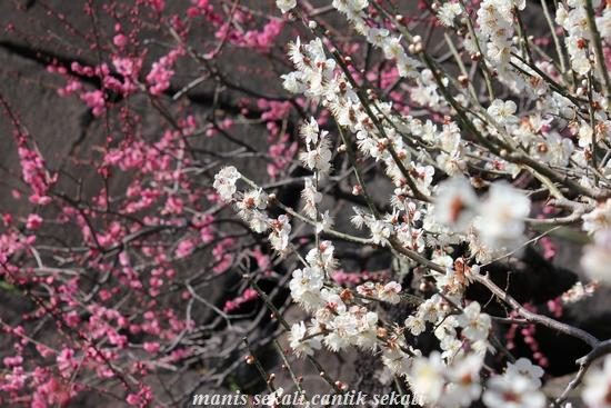 cantik3_20110226214000.jpg