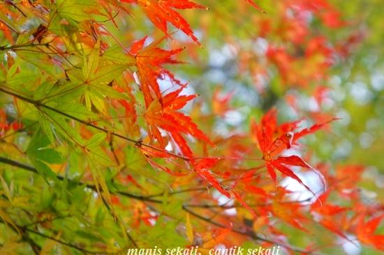 cantik6_20101120213911.jpg