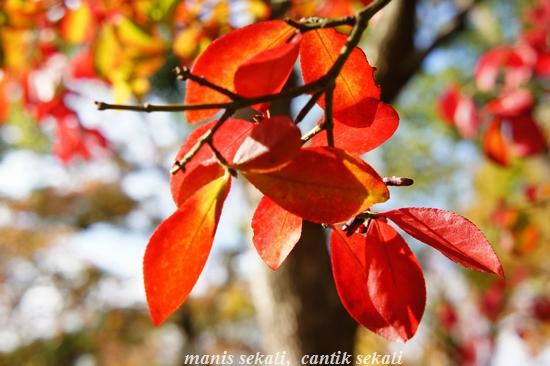 cantik7_20101120210228.jpg