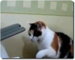 catvsprinter.jpg