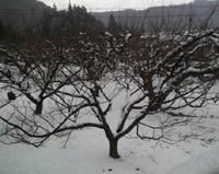 またこんなに雪が積りました。