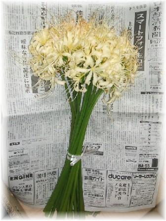 彼岸花-2