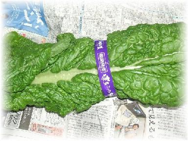 かつお菜-1